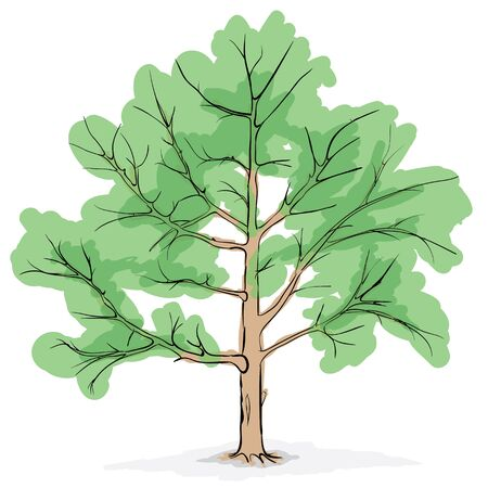 The simplified image of a crone of the big tree  Vector