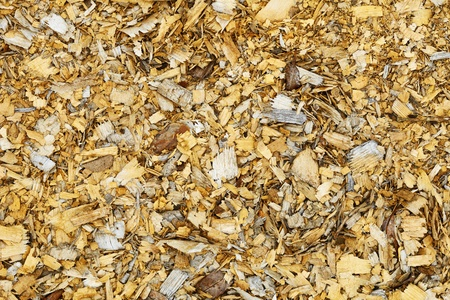 Natural background - an old wood brown shavings photo