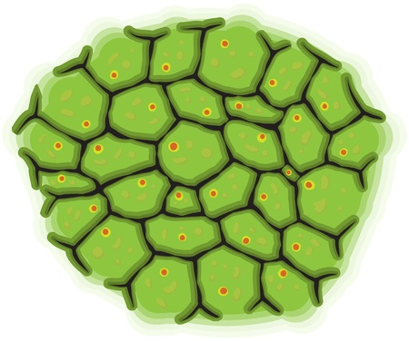 Vector illustration - a schematic representation of living cells Vector