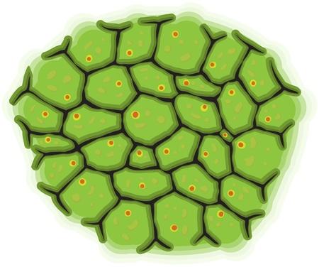 Vector illustration - a schematic representation of living cells Stock Vector - 10113355