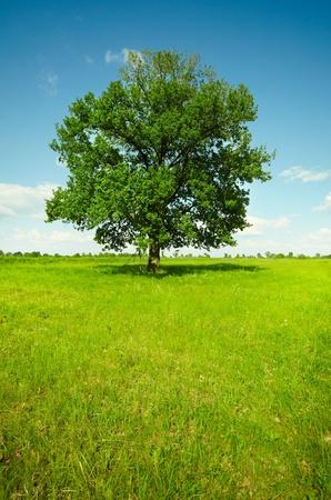 Verticale landschap - een veld met een enkele eik