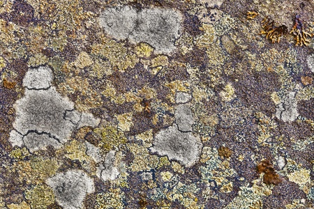 Surface of the granite rocks covered with lichen photo