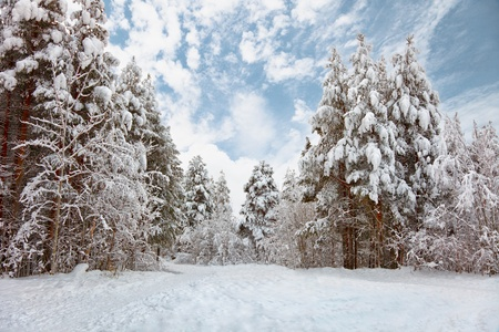 Snow-covered road in the northern winter forest - landscape Stock Photo - 11438842