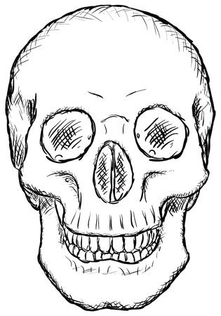 bared teeth: The human skull - rough vector drawing