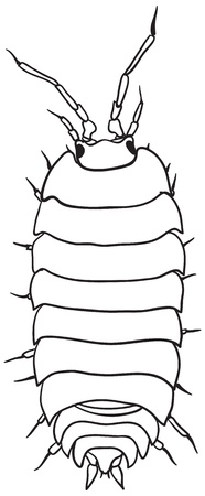 centipede: Common woodlouse - a simple monochrome vector drawing