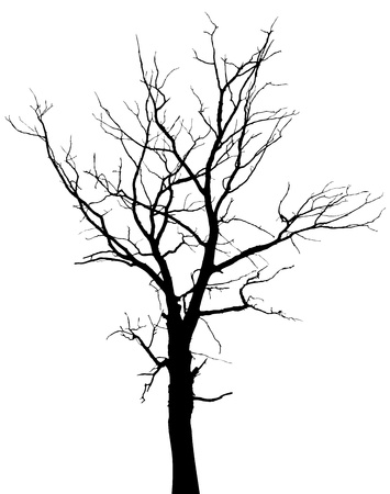Dead tree with branches and without leaves - silhouette Vector