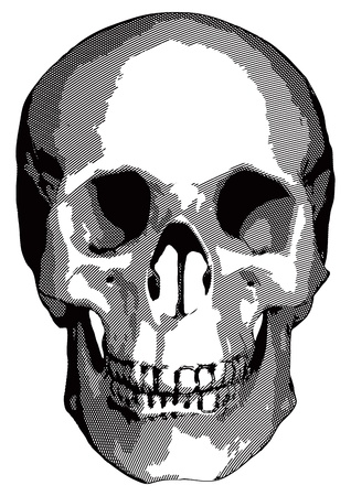 bared teeth: Monochrome graphics - a human skull on a white background