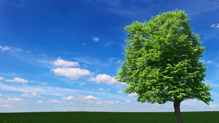 A large tree growing among the meadows Stock Photo - 14101595