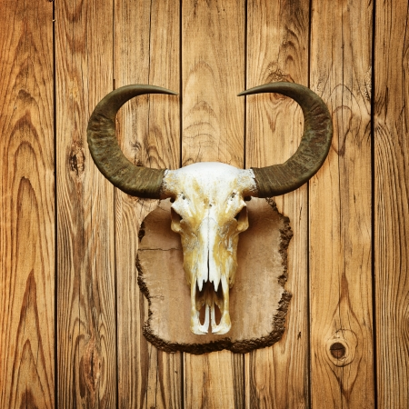 Old buffalo skull hanging on wooden wall photo