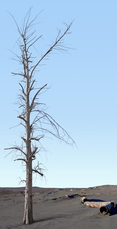 Dead tree in the area of environmental disaster photo