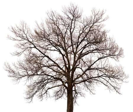 A silhouette of a tree isolated on white background