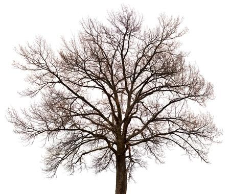 chobot: Silueta stromu izolovaných na bílém pozadí