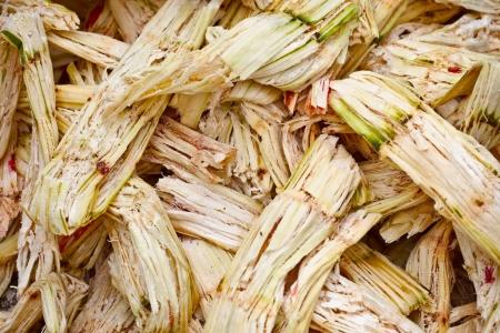 sugarcane: Sugarcane bagasse - the waste of sugar manufacture