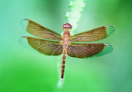 Brown dragonfly on grass photo