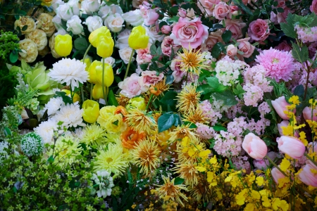 Background of colorful variety flowers photo