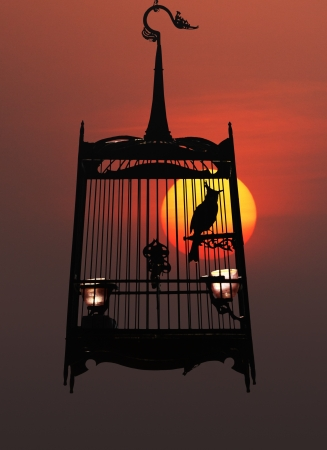 Singing bird in a cage at night, against the setting sun photo
