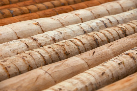 woody: The logs from the trunks of palm trees - a material for construction of tropical housing