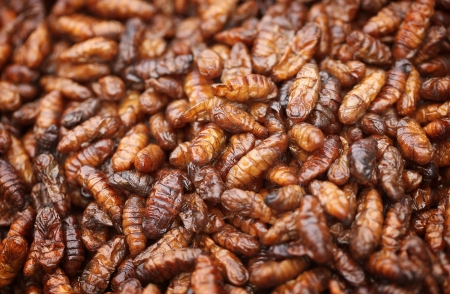 Fried in oil silkworm larvae close up photo