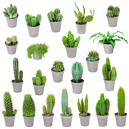 Set of indoor plants in pots - cacti and other succulents