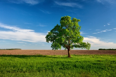 Lonely one tree on the edge of the arable land photo
