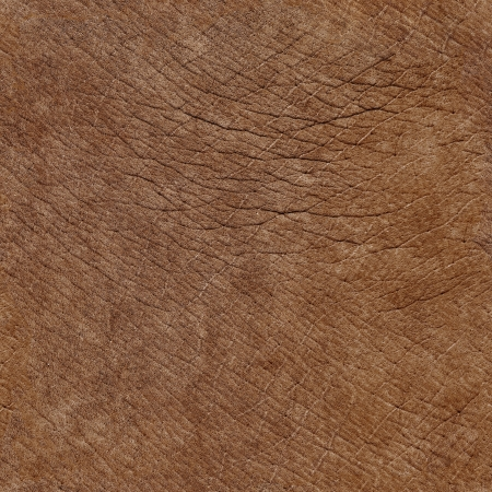 Elephant skin surface - seamless natural texture photo