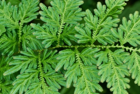 Green fern leaves close up photo