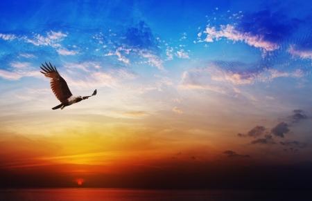獲物の鳥 - 海の背景の上の美しい日没 Brahminy 凧の飛行 写真素材