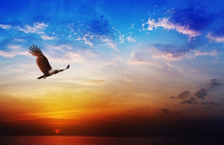 flying eagle: Bird of prey - Brahminy Kite flight on beautiful sunset above the sea background