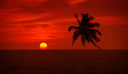 Palm tree silhouette on saturated red sunset sky background photo