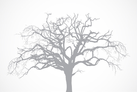 Bare old dry dead tree silhouette without leaf. Vector oak crown