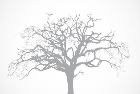 죽은: 잎이없는 맨 손으로 오래 된 마른 죽은 나무의 실루엣. 벡터 오크 크라운