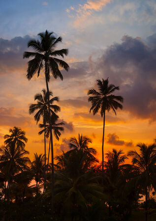 Tropical palm trees against the sky at sunset - Vertical high-resolution panorama photo