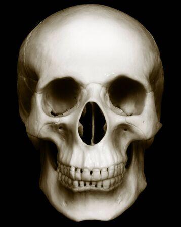 bared teeth: Human skull isolated on dark background
