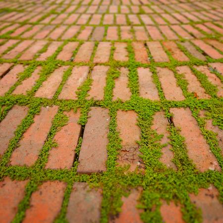 adoquines: Enredaderas verdes brotando y creciendo entre las grietas alrededor de adoquines de ladrillo individuales.