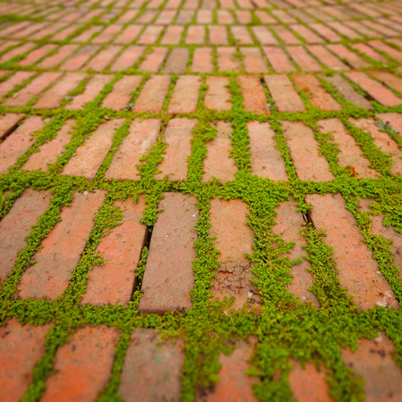 creepers: Green creepers sprouting and growing between the cracks around individual brick pavers.
