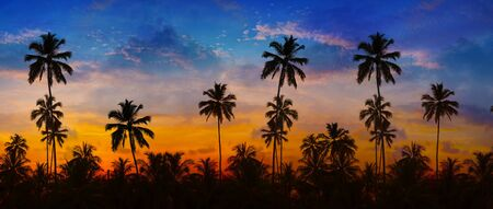 sharply: Coconut palms, sharply silhouetted against the bold orange, pink, lavendar and blue colors of a tropical sunset in Thailand, Southeast Asia. Stock Photo