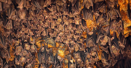 eyes cave: Colony of bats, hanging from the ceiling of Goa Lawah Bat Cave Temple and sleeping, in Bali, Indonesia.