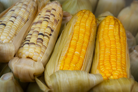 shuck: Boiled corn at a street vendors stand close up