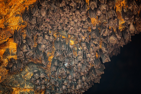 eyes cave: Colony of bats hangs from the ceiling of a cave, inside Goa Lawah Bat Cave Temple in Bali, Indonesia. Stock Photo