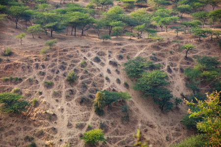 denuded: Wilderness area near Pushkar, India, denuded of vegetation by recreational vehicle tracks crisscrossing on a steep hillside.