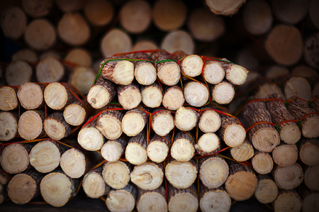 thanaka: Pieces of wood with bark on the market - it is raw material for the production of thanaka
