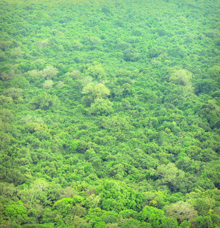 tropical evergreen forest: Jungle. Tropical forest from a birds eye view. Sri Lanka