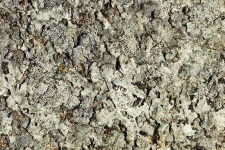 Background - surface of rock (Khibiny Massif) Reklamní fotografie