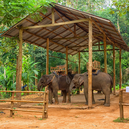 Laos, Elefant mit sitzt, für Touristen reiten. Wald im Hintergrund Standard-Bild - 87233030