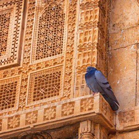 Jaisalmer, Rajasthan, Indien. Taube müde zu scheißen, und sie ruht auf der Fassade des Königspalastes Standard-Bild - 87233046