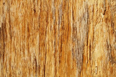 Faules Hartholz. Die Textur von olg Holz. Standard-Bild - 87325547