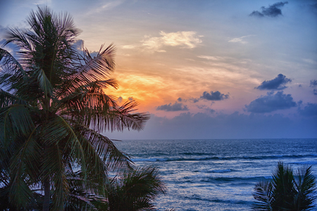 Silhouette of coconut palm trees against the evening sea