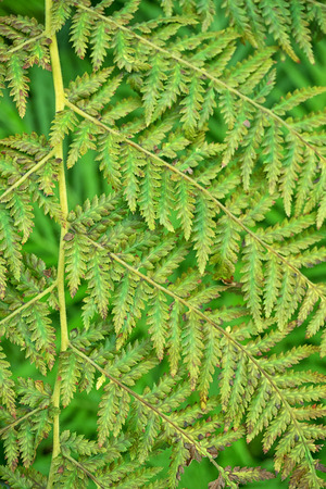 Green fern natural background Stock Photo