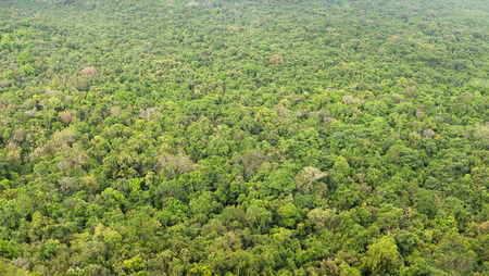 Jungle, view from above. Top view of forest Standard-Bild - 90252622