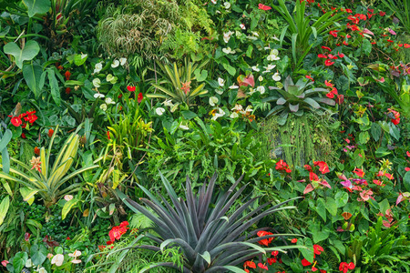 Tropical plants with flowers - natural decorative background Standard-Bild